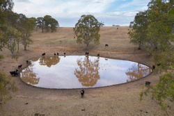 Aerial view of an agricultural water dam with cows and ducks outside of Adelaide in South Australia