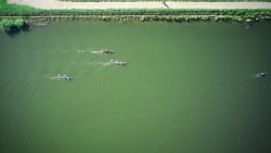 Aerial view of boat teams sculling across the water