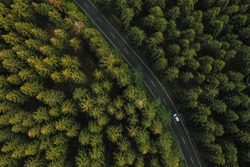Aerial view of car driving through the forest on country road.