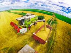 Aerial view of combine on harvest field in Serbia loading trailer with wheat. Wide angle shot.