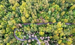 Aerial view of curvy road in beautiful autumn forest. Top view of roadway with autumn colors.