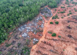 Aerial view of deforestation process