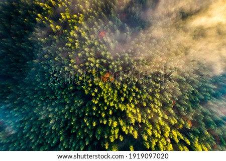Aerial view of dense green pine forest with canopies of spruce trees and colorful lush foliage in autumn mountains. Сток-фото ©