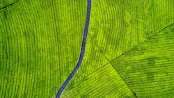 Aerial view of empty highway on the tea plantation. Shot at Subang highlands, Indonesia