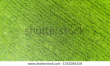 Aerial view of farmlands. Vintage tone. Bright and vivid green. Spring farmland. Taiwan farmland. #1333286318