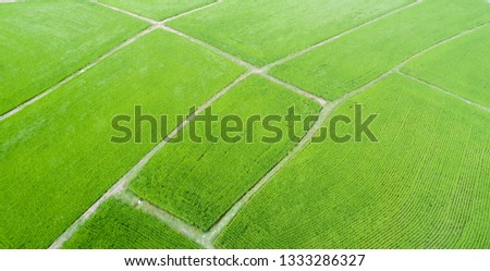 Aerial view of farmlands. Vintage tone. Bright and vivid green. Spring farmland. Taiwan farmland. #1333286327