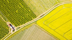 Aerial view of flowering rapeseed field and orchard with fruit trees. Beautiful outdoor countryside scenery from drone view. Many blooming plants and trees. Spring scenery background.