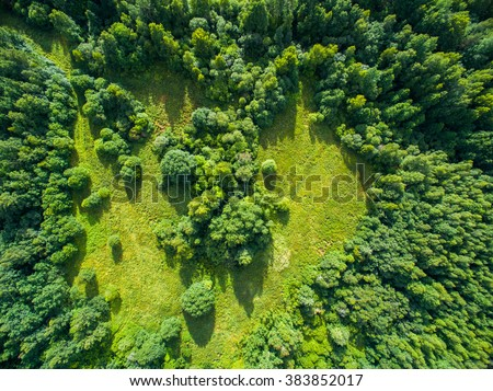Aerial view of forest #383852017