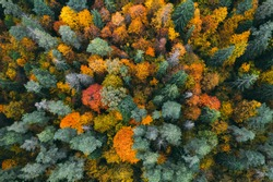 Aerial view of forest in autumn with colorful trees. Drone photography.