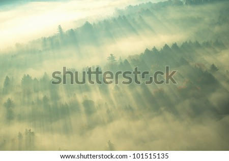 Aerial view of forest on a misty morning, Vermont