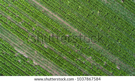 Aerial view of green agricultural field from drone
