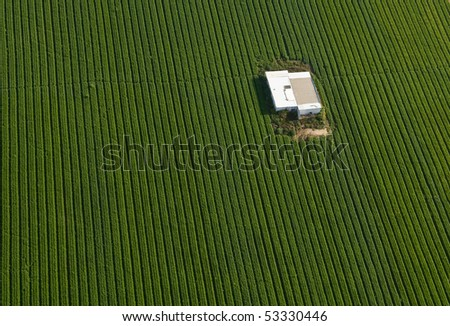 Aerial view of green carrot Field with a warehouse in it, Israel