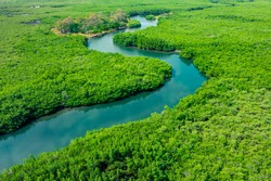 Aerial View of Green Mangrove Forest. Nature Landscape. Tropical Rainforest. Africa. Gambia. Senegal.