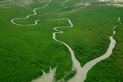 Aerial view of Green mangroves and  Godavari River meeting Bay of Bengal sea, Andhra Pradesh ,India, Asia