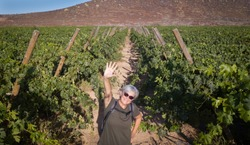 Aerial view of happy smiling woman senior with gray hair. walking through bunches of grapes. looking at drone. Excursion for healthy lifestyle. One people caucasian.Green vineyard in background.
