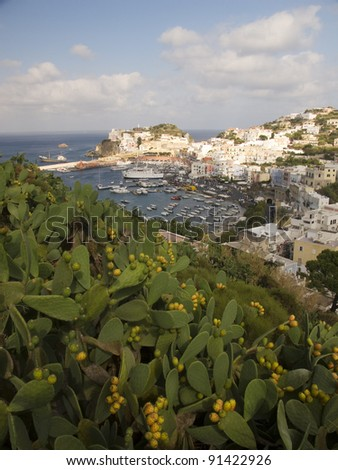 Aerial view of island coastline (Ponza, Italy), framed by a field of cactus figs