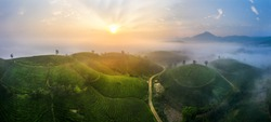 Aerial view of Long Coc tea hill, green landscape background, green leaf. Tan Son, Phu Tho, Vietnam
