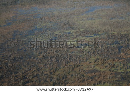 Aerial view of Louisiana swamp with trees