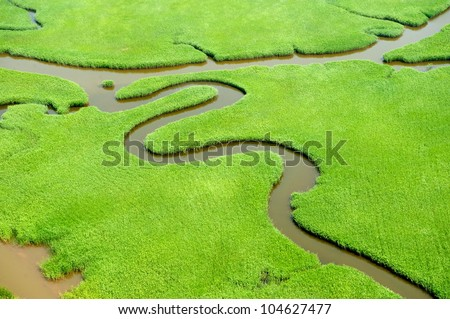 Aerial view of lush coastal wetlands