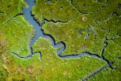 Aerial view of lush coastal wetlands in UK