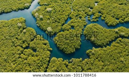 Aerial view of mangrove forest and river on the Siargao island. Mangrove jungles, trees, river. Mangrove landscape. Philippines. #1011788416