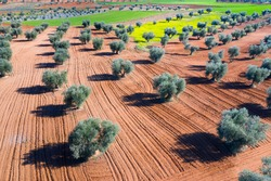 Aerial view of olive groves and cereal fields, Toledo province, Castilla La Mancha Autonomous Community, Spain, Europe