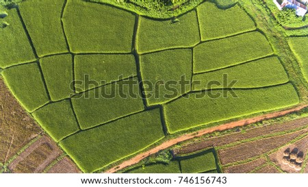 Aerial view of paddy field in Central Thailand #746156743