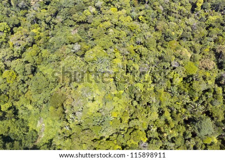 Aerial view of pristine rainforest in the Ecuadorian Amazon