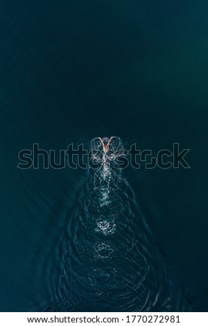 Aerial view of professional swimmer diving swimming in sea. Overhead view of sportsman diving in blue water. Aerial top view of man in water in motion Stock fotó ©