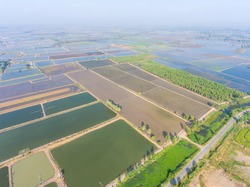 Aerial view of Rice farm with Water in preparing phase