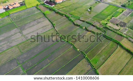 Aerial View of Rice Field Terrace. Indonesia. Bali #1410008606