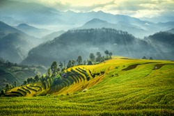 Aerial view of Rice fields on terraced of Lao and Chai village Mu Cang Chai, YenBai, Vietnam. Vietnam landscapes.