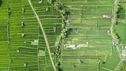 Aerial View of rice paddy fields in Indonesia in Bali