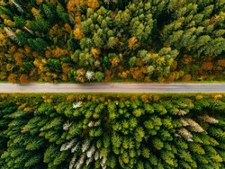 Aerial view of road in autumn forest. Fall landscape with road, red, yellow and green trees.