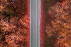 Aerial view of road in autumn forest, trees with red leaves, top view. Fall colors nature, aerial autumn landscape