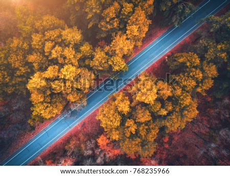 Aerial view of road in beautiful autumn forest at sunset. Beautiful landscape with empty rural road, trees with red and orange leaves. Highway through the park. Top view from flying drone. Nature