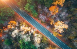 Aerial view of road in beautiful autumn forest at sunset. Colorful landscape with empty road  from above, trees with red, yellow and orange leaves. Highway in park. Top view. Autumn colors. Fall woods