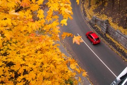 Aerial view of road with red car in beautiful autumn forest. Beautiful landscape with rural road, trees with red and orange leaves. Highway through the park. Top view. Nature background.
