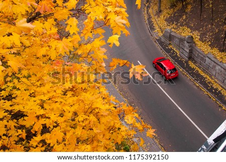 Aerial view of road with red car in beautiful autumn forest. Beautiful landscape with rural road, trees with red and orange leaves. Highway through the park. Top view. Nature background. #1175392150