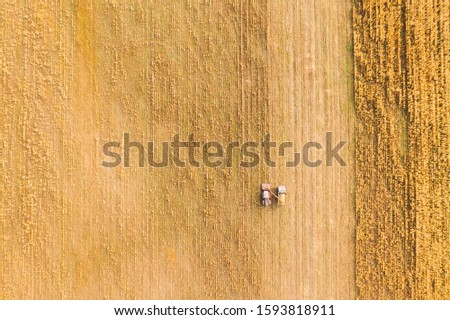 Aerial View Of Rural Landscape. Combine Harvester And Truck Working Together In Field, Collects Seeds. Harvesting Of Wheat In Autumn. Agricultural Machine Collecting Golden Ripe. Bird