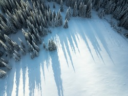 Aerial view of snow covered pine trees with long tree shadows