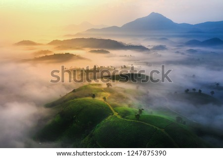 Photo of Aerial view of tea hills in Long Coc highland, Phu Tho province in Vietnam