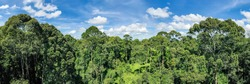 Aerial view of the Borneo rainforest at Klias Forest Reserve, Beaufort Sabah.