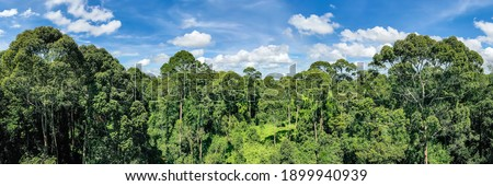 Aerial view of the Borneo rainforest at Klias Forest Reserve, Beaufort Sabah. Stock photo ©