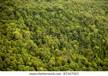 Aerial view of the forest / jungle canopy
