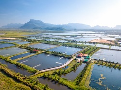 Aerial view of the prawn farm with aerator pump in front of Khao Sam Roi Yot National Park, Thailand. The growing aquaculture business continuously threatening the nearby wetlands.