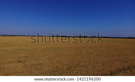 Aerial view of the wheat fields. Wheat fields from a height. Top down view of the wheat fields. #1421196200