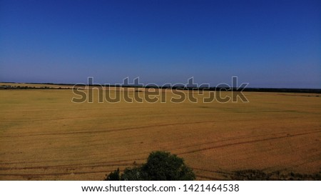 Aerial view of the wheat fields. Wheat fields from a height. Top down view of the wheat fields.