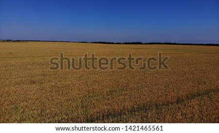 Aerial view of the wheat fields. Wheat fields from a height. Top down view of the wheat fields. #1421465561