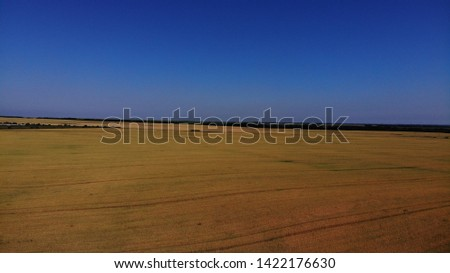 Aerial view of the wheat fields. Wheat fields from a height. Top down view of the wheat fields. Topdown view of the wheat fields.
